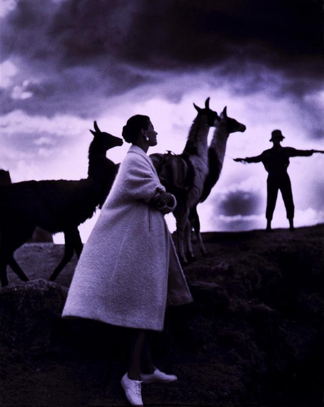 Toni_Frissell,_Llamas,_Cusco,_Peru,_1952.jpg